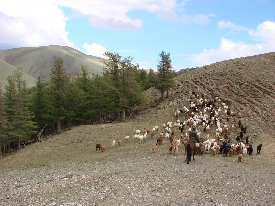 Mongolian Altai